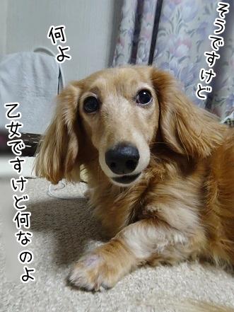 kinako9043.jpg