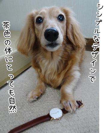 kinako9045.jpg