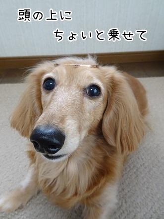 kinako9046.jpg