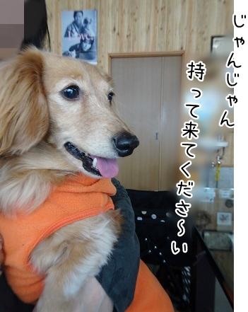 kinako9049.jpg