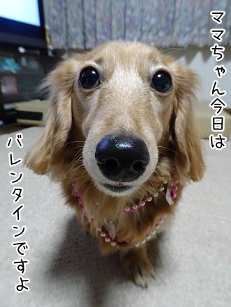 kinako9055.jpg
