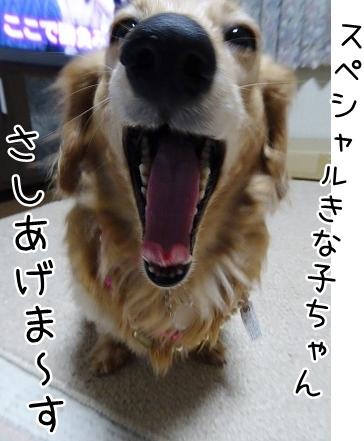 kinako9057.jpg