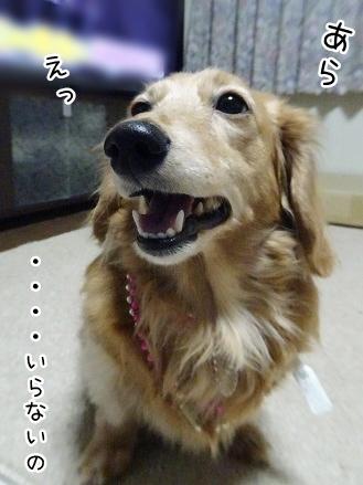 kinako9058.jpg