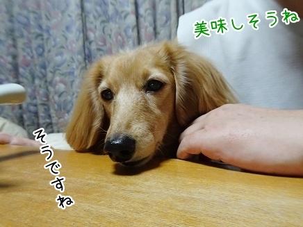 kinako9062.jpg