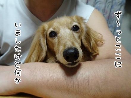 kinako9063.jpg