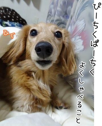 kinako9065.jpg