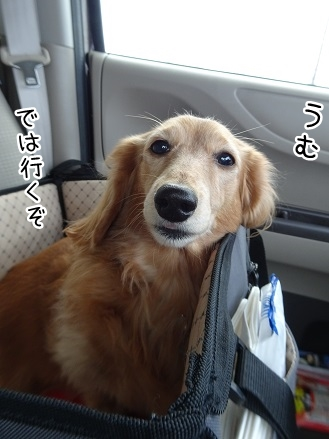 kinako9071.jpg