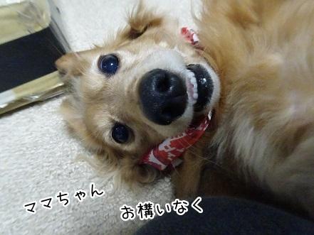 kinako9075.jpg