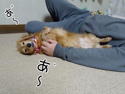 kinako9077.jpg