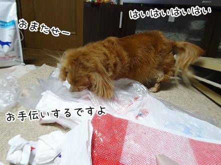 kinako9078.jpg