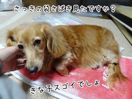 kinako9082.jpg
