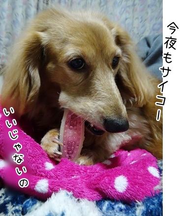 kinako9085.jpg