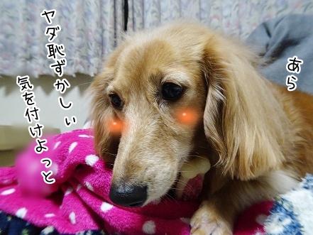 kinako9086.jpg