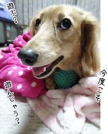 kinako9093.jpg