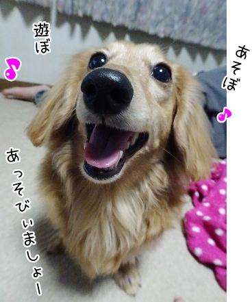 kinako9095.jpg