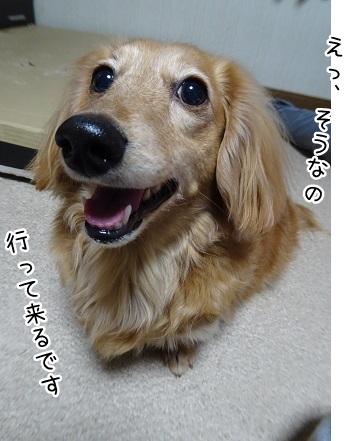 kinako9096.jpg
