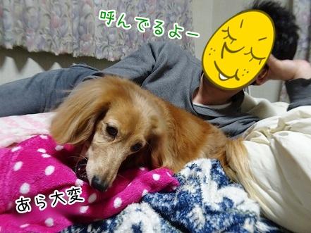 kinako9097.jpg
