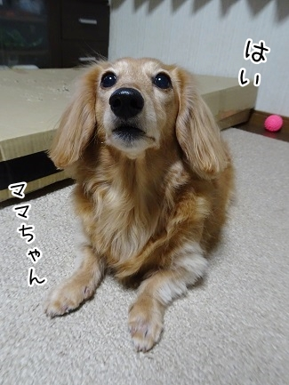 kinako9102.jpg