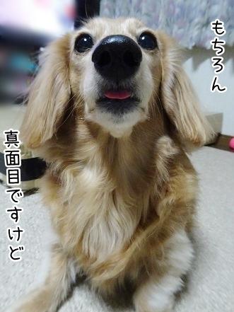 kinako9105.jpg