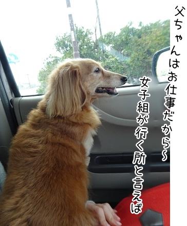 kinako9107.jpg