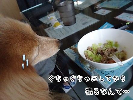 kinako9111.jpg