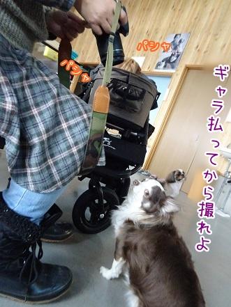 kinako9114.jpg