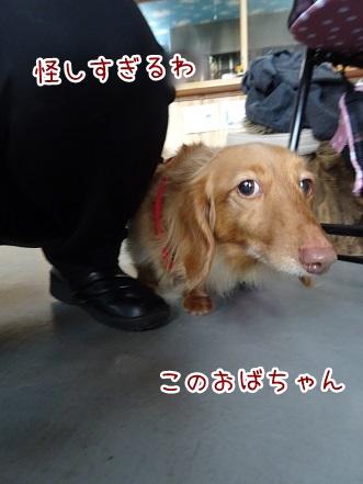 kinako9115.jpg