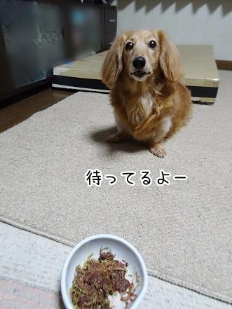 kinako9122.jpg