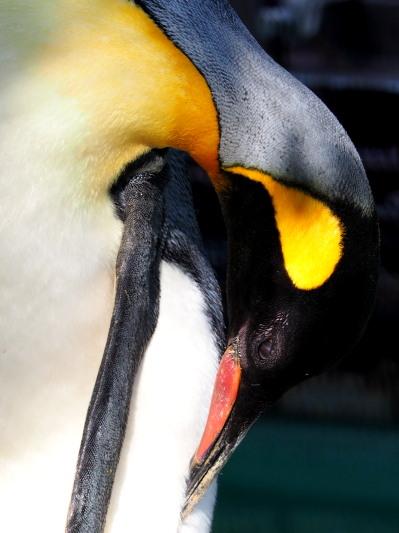 今後ともよろしくお願いいたします。ペンギン