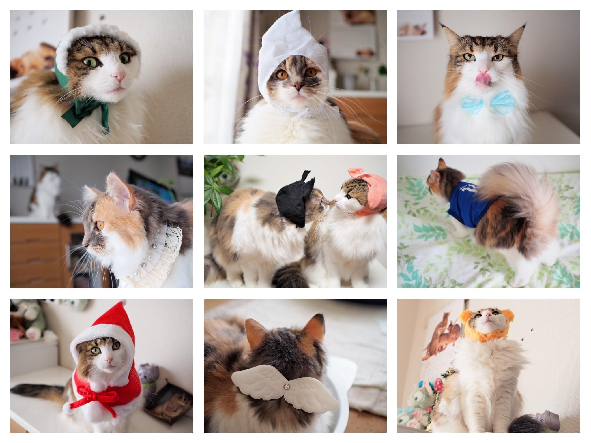 2017_cats.jpg