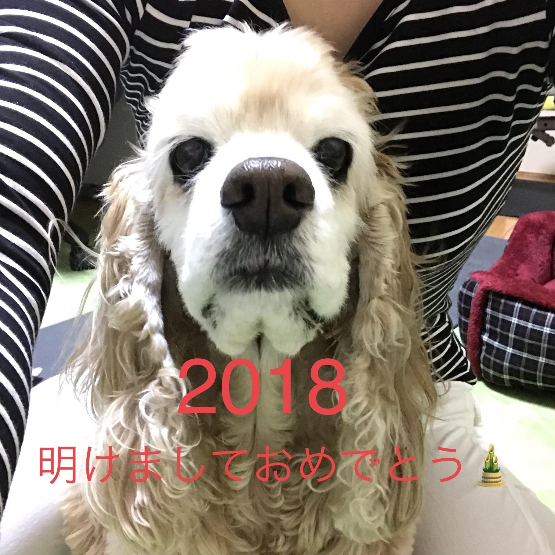 201801012053531af.jpeg
