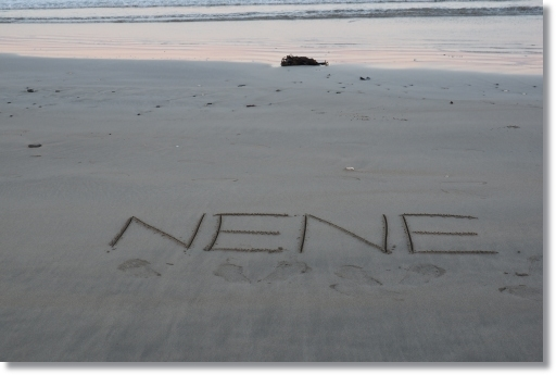 NE029521.jpg