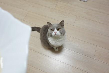20180222猫の日2