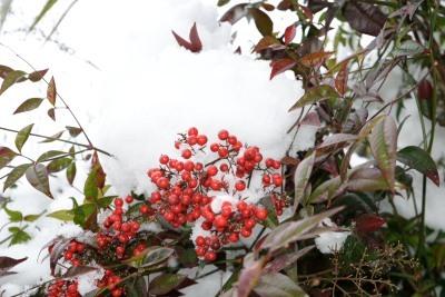 雪DSC_0063