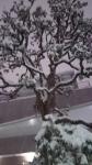 1月雪10