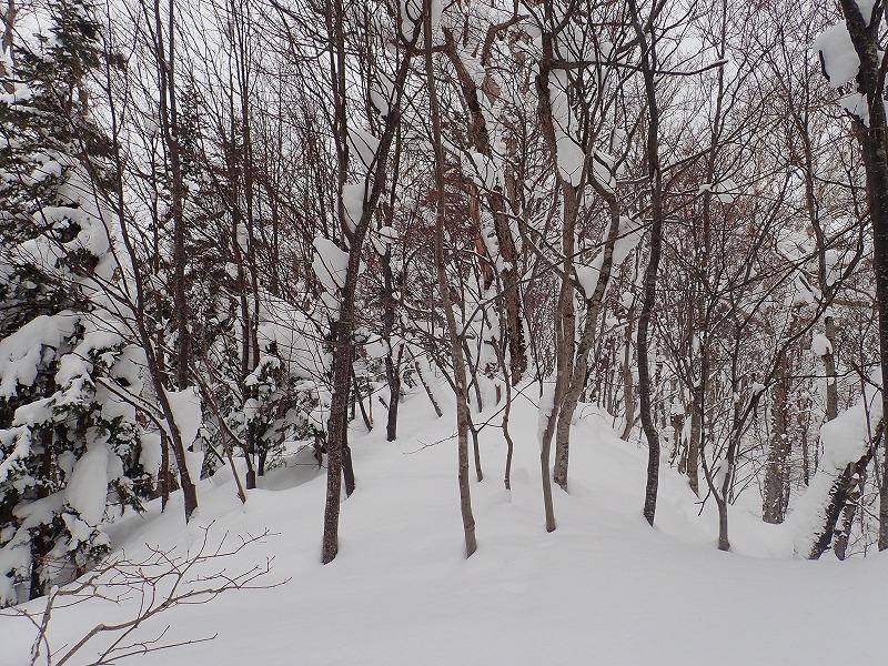 竹山樹木の尾根