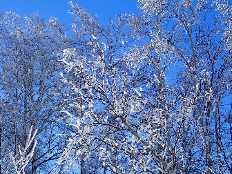 音江山樹氷