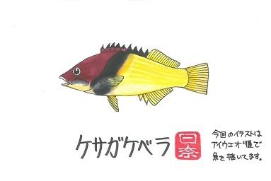 ケサガケベラ