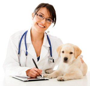 04 300 veterinarian
