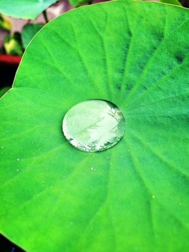 08 500 water drop on a leaf