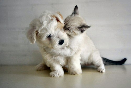 03 500 kitten kisses puppy