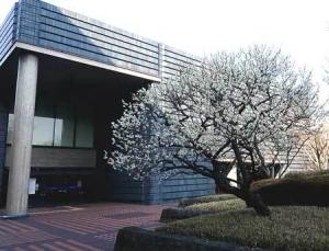 国会図書館前梅
