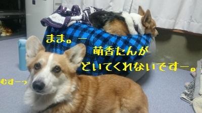 4DSC_0595.jpg
