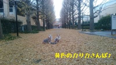 5DSC_0573.jpg