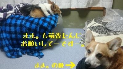 5DSC_0596.jpg