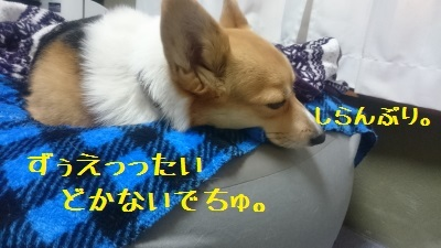 6DSC_0597.jpg