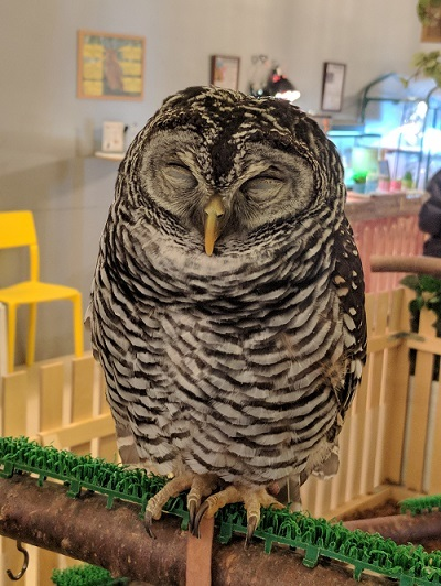 人懐っこさが異常!鳥類にハマること間違い無し『Moff animal cafe』