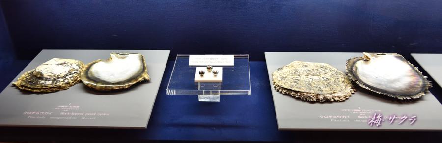 真珠博物館3変更済