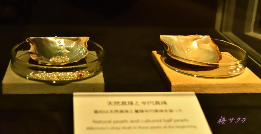真珠博物館4変更済