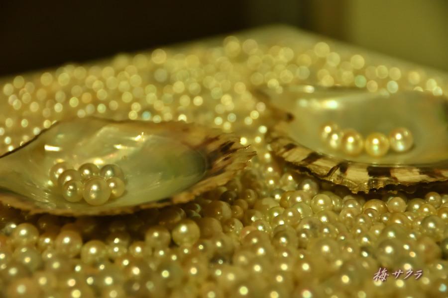 真珠博物館5変更済